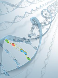 DNA模式図